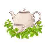 melissa tea illustration - 208263934