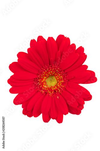 Fotobehang Gerbera flower on white background