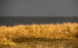 Beach Grass1 - 208268357