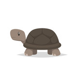 Tortoise turtle vector isolated - 208274149
