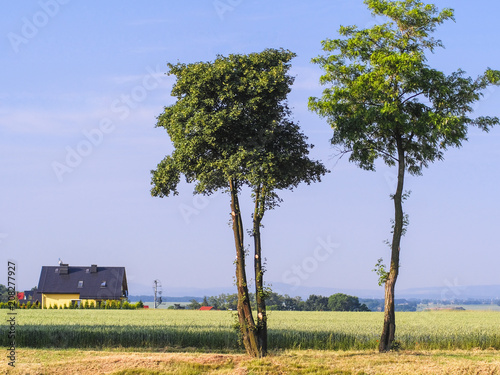 Poland, May, 31, 2018: Landscape with the image of farm in Poland with tree on a frontground