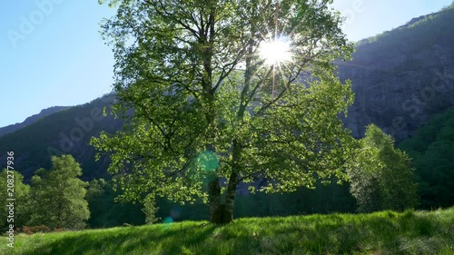 Sun breaking through green tree leaves. Beautiful summer landscape. 4K
