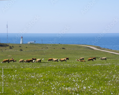 Fotobehang Vuurtoren Cheticamp Lighthouse and Pasture with Cows