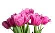 Tulip. - 208306943