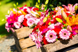 Two wooden flower boxes containing gerberas