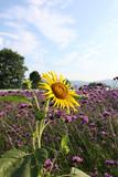 Dongting wild flower scenic spots