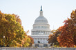 View of United States Congress Capitol building closeup framed by alley of golden orange yellow foliage autumn fall trees on street road during sunny day in Washington DC