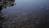 Calm water floats above rocky ocean floor rocky Hawaiian beach - 208322186