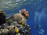 Marine life design template beautiful coral reef with cuttlefish - 208324700