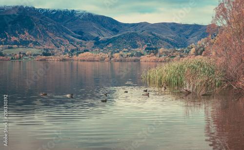 Fotobehang Diepbruine Autumn in Lake Hayes, Queenstown New Zealand landscape