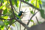 Common Kingfisher in Bangkok,Thailand - 208337588