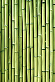 Green bamboo wood wall background texture vertical