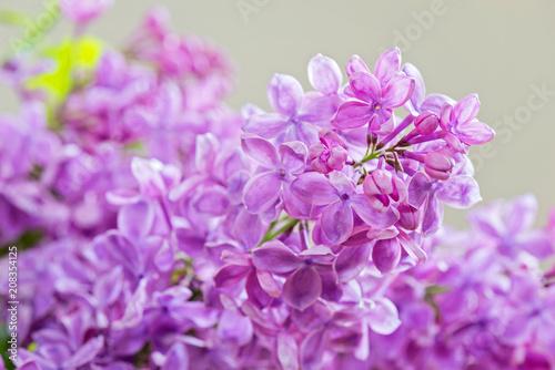 Macro shot of lilac