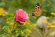 Schmetterling 413