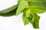 Close-up of mint on white background. Isolated. - 208362565