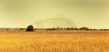 Bewässerung eines Getreidefeldes - 208364162