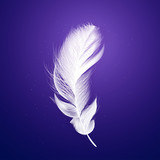 Shiny white feather on purple background. - 208364708