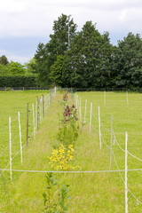 fenced flower path on a pasture