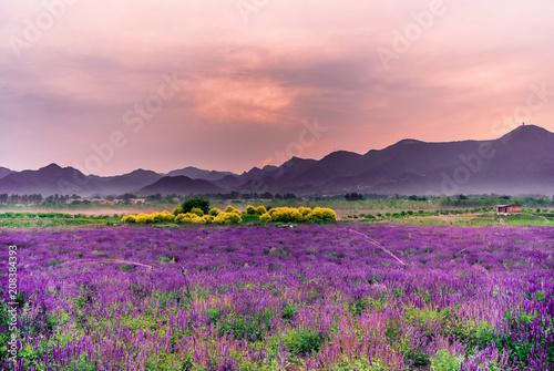 Fotobehang Lichtroze Lavender flowers