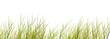 canvas print picture - freigestellte schilfgräser