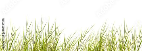 canvas print picture freigestellte schilfgräser