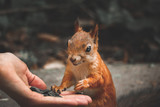 hungry squirrel - 208398729