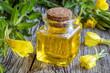 A bottle of evening primrose oil with fresh evening primrose plant - 208435119