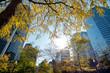 City in autumn