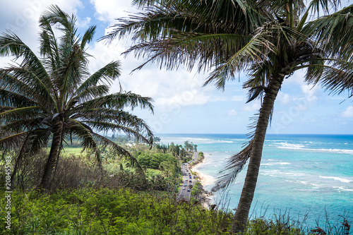 Fototapeten Strand Hawaii Scenic Coast with clear blue ocean water looking through palm trees