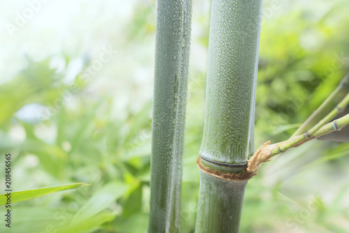 Fotobehang Bamboe image of bamboo branches with freshness water drops on it.