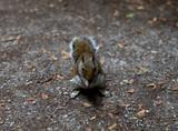 Holland Park Wildlife - 208462165