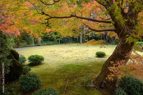 Canvas Honing 京都 大河内山荘庭園の紅葉
