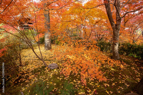 Fotobehang Kyoto 京都 常寂光寺の紅葉
