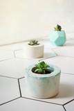 Various succulent flowers in cement pots, selective focus - 208466156