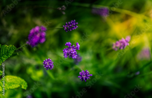 Aluminium Lavendel fleur de lavande