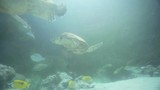 Turtles and colorful Fish in underwater - 208476132