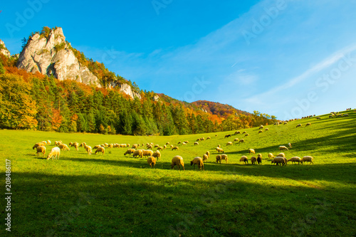Aluminium Herfst Mountains in the Sulov rocks Nature Reserves with sheeps in the autumn, Slovakia