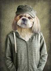 Cute dog shih tzu portrait, wearing human clothes, on vintage background. Hipster dog.