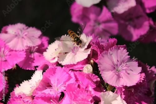 Foto Murales nice spring flowers