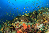 Colorful Coral Reef with Schools of Fish against Blue Water. Pescador Island, Moalboal, Philippines