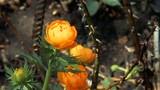 Orange wildflowers in the garden. Nature background - 208507759
