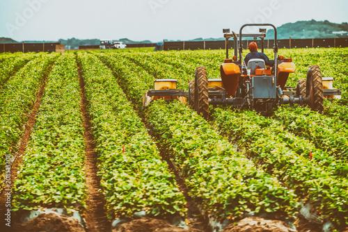 Fotobehang Trekker Tractor at work in a field