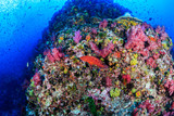 Schools of Tropical Fish swimming around a tropical coral reef in Asia