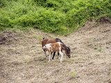 mare and foal in a field. - 208526909