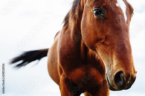Fotobehang Paarden Portrait of beautiful red horse in summer