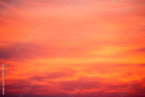 Fotobehang Koraal Beautiful summer sunset