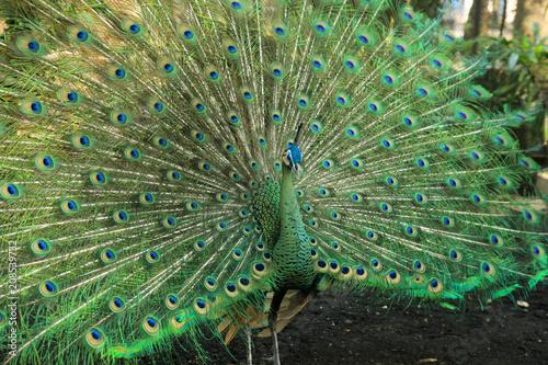Aluminium Pauw green peacock charm