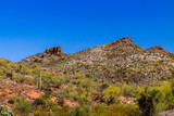 Rugged hillside in Arizona's Sonoran desert in springtinme; bright red and white earth is covered with giant Saguaro cacti, prickly pear and other native plants; The deep blue desert sky is overhead. - 208545199