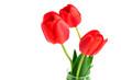 Red tulips in vase isolated on white background.