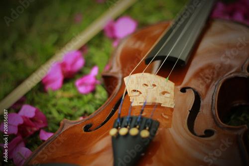 Violin - 208556587